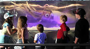 News2 Giant Squid Permachill